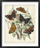 Non-Embellished Butterfly Haven I Framed Print