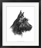 Framed Canine Study II