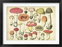 Framed Vintage Mushroom Chart