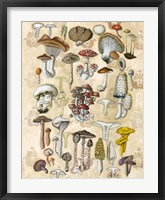 Mycological Study Framed Print