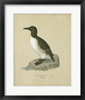 Framed Antique Penguin II