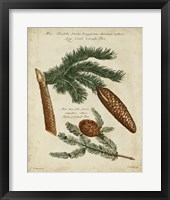 Framed Antique Conifers III