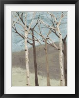 Framed Blue Birches II