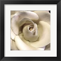Framed Blushing Rose I