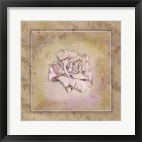 Rose Square I Framed Print