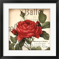 Scent of a Rose I Framed Print