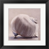 Framed Moon Snail