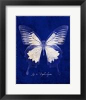 Framed Blue Mountain Butterfly Cyanotype