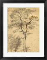 Framed Three Studies of Trees
