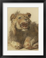 Framed Lion Snarling