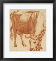 Framed Cow Grazing