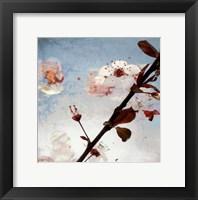 Framed Blossom Morning 2