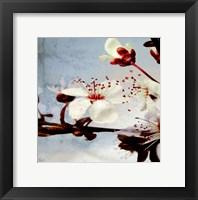Framed Blossom Morning 3
