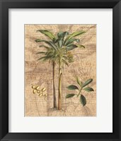 Palm Study I Framed Print