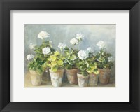 Framed White Geraniums
