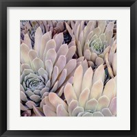 Framed Succulents I