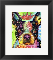 Framed Boston Terrier Crowned