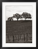 Framed Paso Robles Toned
