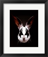 Rabbit Rocks Framed Print
