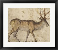 Framed Study of a Stag