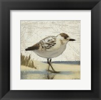 Framed Beach Bird I