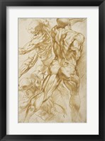 Framed Anatomical Studies