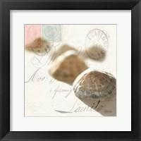 Postal Shells IV Framed Print