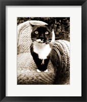 Framed Kitty I