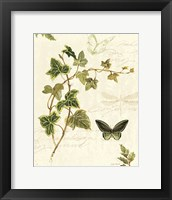 Ivies and Ferns IV Framed Print
