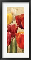 Tulip Fantasy on Cream III Framed Print