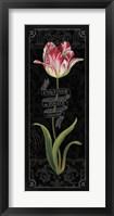 Tulipa Botanica III Framed Print
