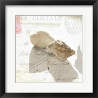 Framed Postal Shells I
