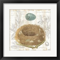 Framed Botanical Nest III