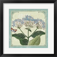Parisian Flower  I Framed Print
