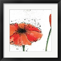 Framed Not a California Poppy III on White