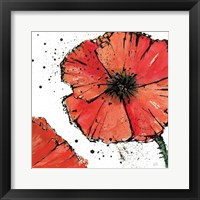 Framed Not a California Poppy on White IV