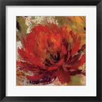 Fiery Dahlias II Framed Print
