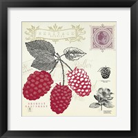 Raspberry Notes Framed Print
