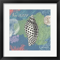 Framed Shells on Blue