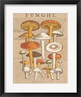 Funghi Velenosi II Framed Print