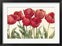 Framed Ruby Tulips