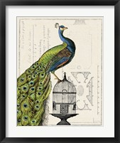 Framed Peacock Birdcage I
