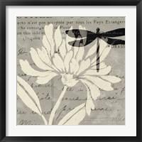 Framed Natural Prints II