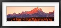 Framed Aspens, Teton Range, Grand Teton National Park, Wyoming, USA