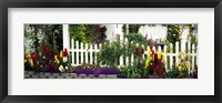 Framed Flowers and picket fence in a garden, La Jolla, San Diego, California, USA