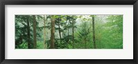 Framed Trees in spring forest, Turkey Run State Park, Parke County, Indiana, USA
