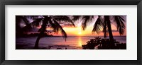 Framed Palm trees on the coast, Kohala Coast, Big Island, Hawaii, USA