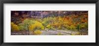 Framed Big Bend in fall, Zion National Park, Utah, USA