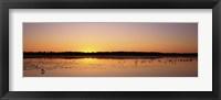Framed Pelicans and other wading birds at sunset, J.N. Ding Darling National Wildlife Refuge, Sanibel Island, Florida, USA