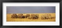 Framed Elephants on the Grasslands, Masai Mara National Reserve, Kenya
